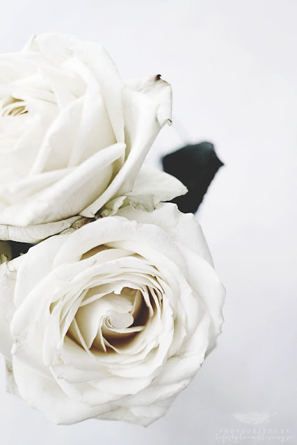 Inspiration Daily - White Roses - Cool Chic Style Fashion