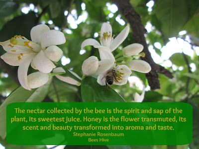 quotes about bees