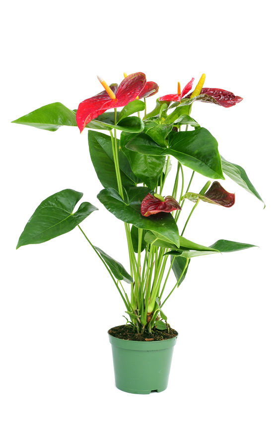 Me And My Shadow Top 10 Houseplants To Clean The Air In