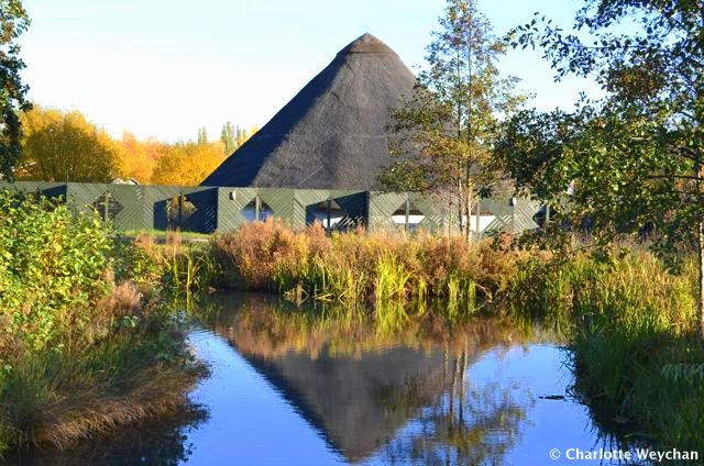 Walk with wildfowl at the London Wetland Centre - a