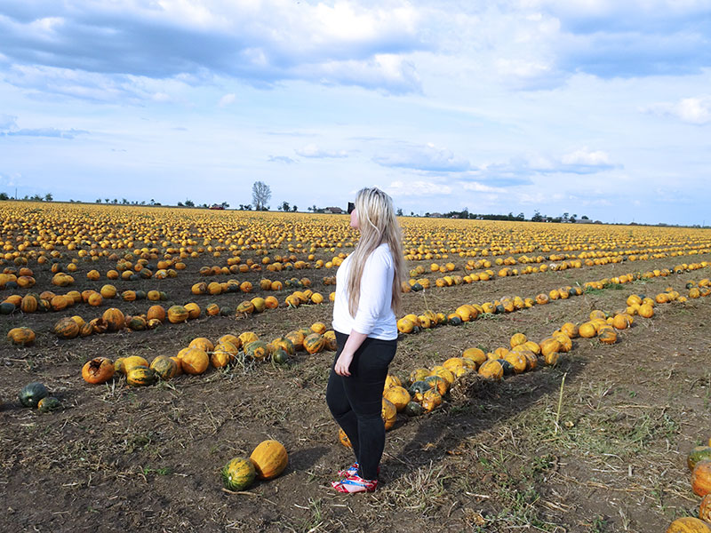 Halloween_Pumpkin_Field