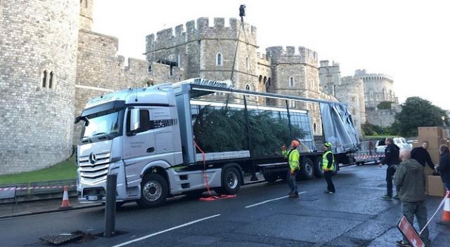 Truk Mercy Angkut Pohon Raksasa dari Jerman ke Istana di Inggris