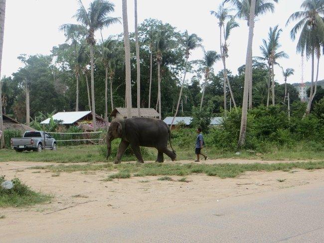 Слон идет по улице