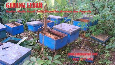 jaal madu ditengerang, toko madu di tangerang, penjual madu di tangerang, agen madu tangerang, madu pramuka, suplier madu di tangerang
