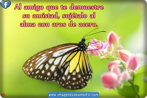 Imagen De Mariposas Con Frases Imagui