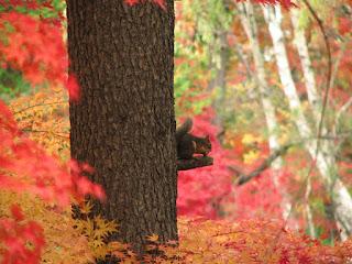 幹から飛び出した枝で餌をかじるリス