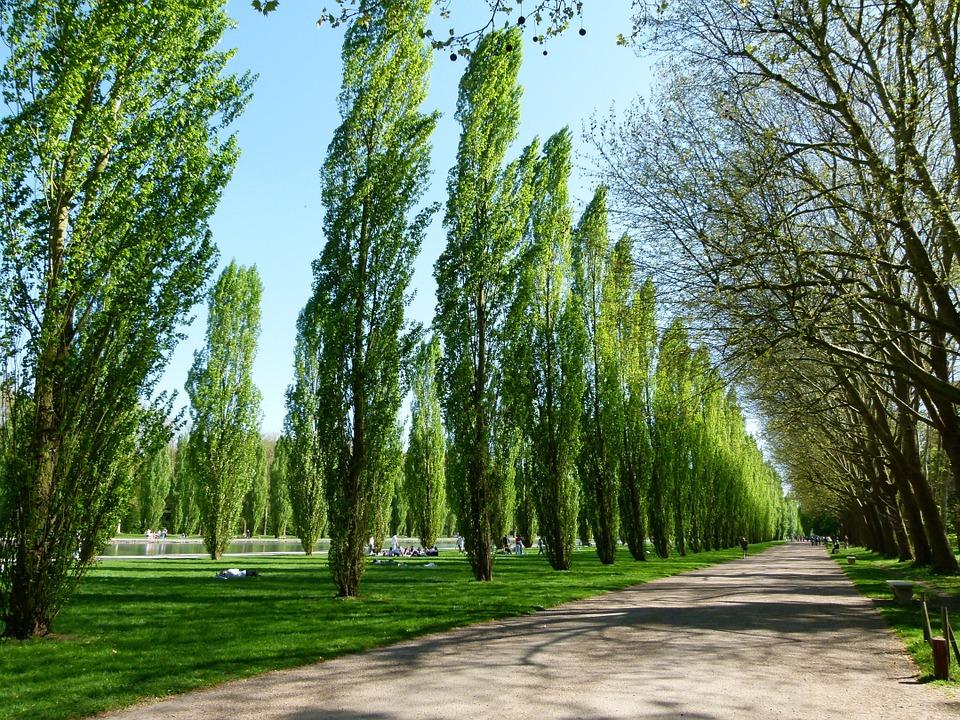 Árboles, árbol de crecimiento rápido