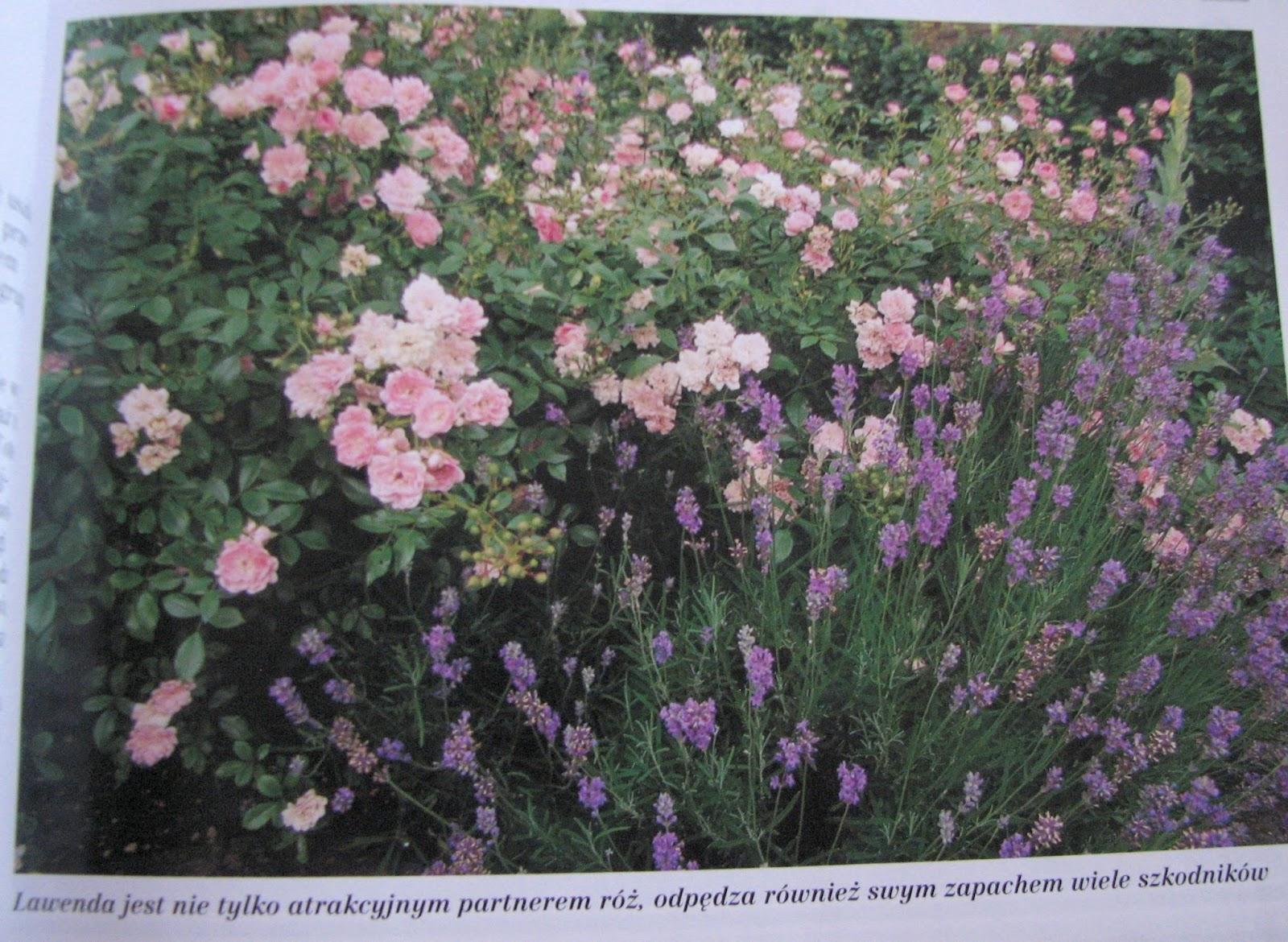 ogród wiejski, ogród w stylu wiejskim, ogród przydomowy