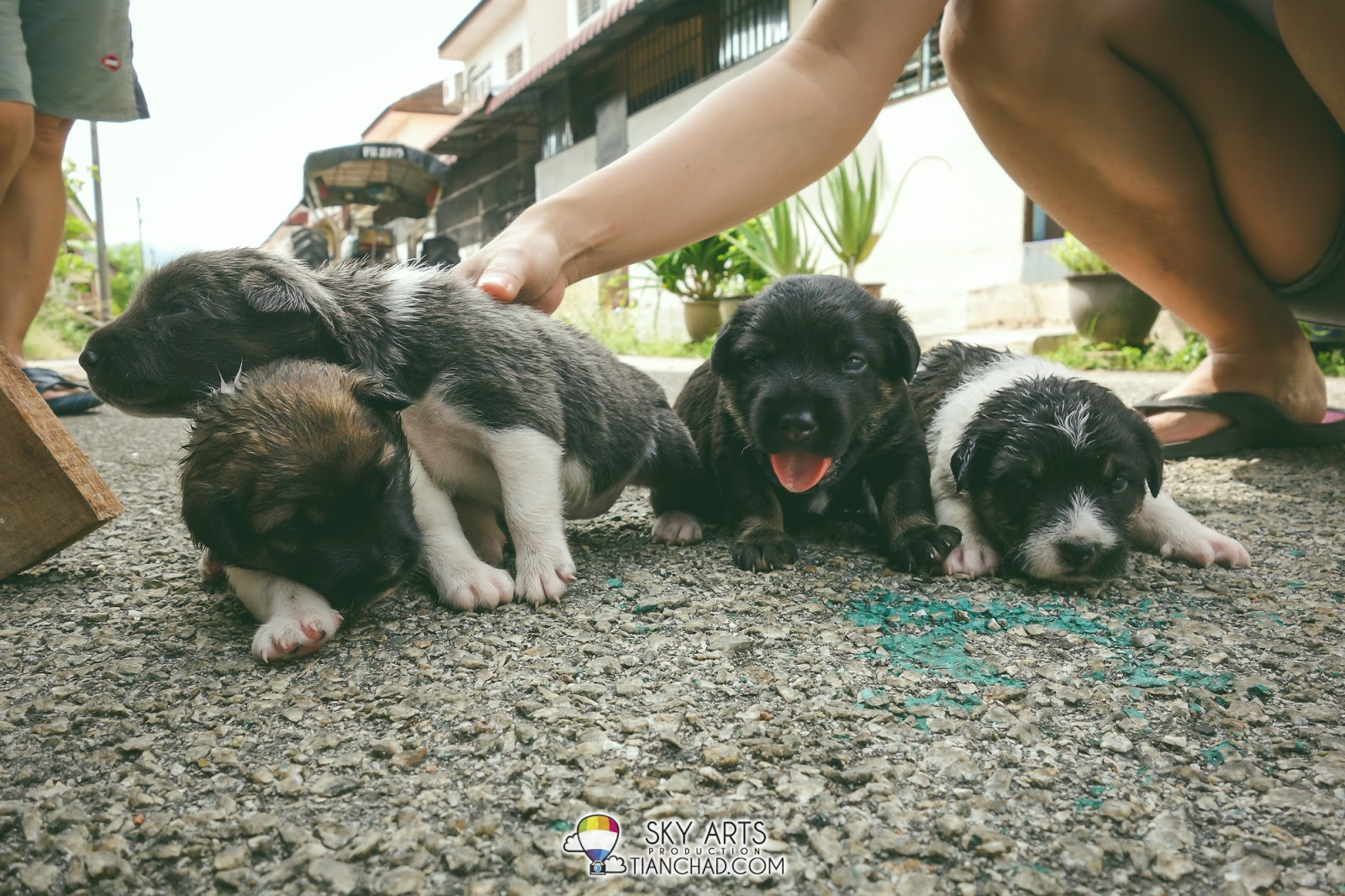 cute puppies family photo sleeping crawling looking for mom's milk
