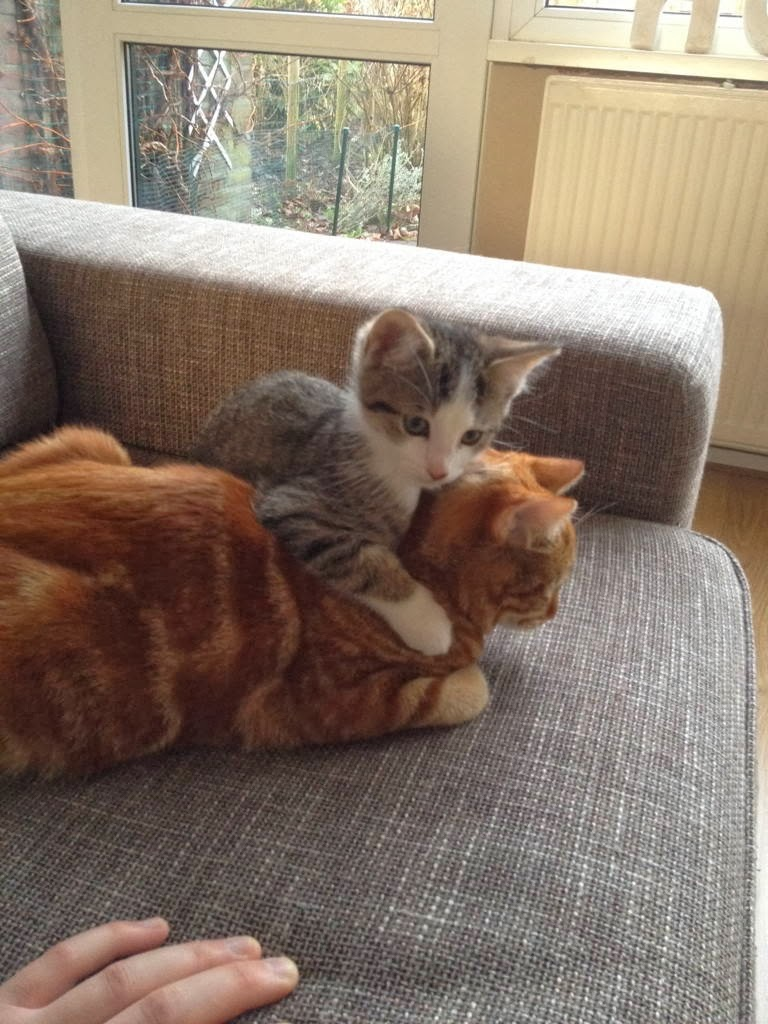 Funny cats - part 87 (40 pics + 10 gifs), kitten hugs his big cat brother on the couch