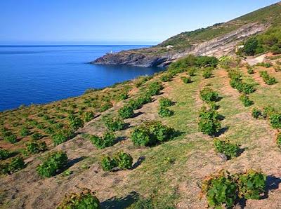 vigne pantelleria