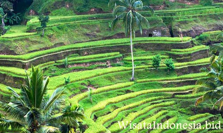 Objek Wisata Di Kabupaten Gianyar Bali Wisata Indonesia