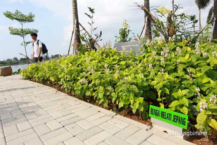 bunga melati jepang taman kota ria rio jakarta