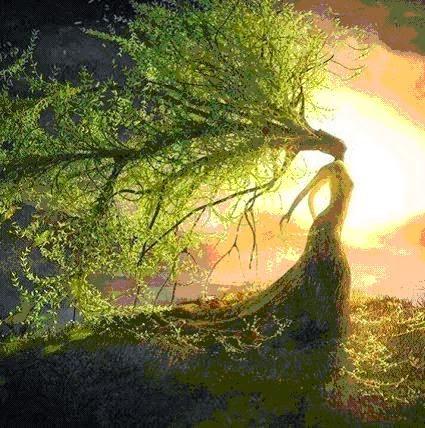 Primavera-milagro