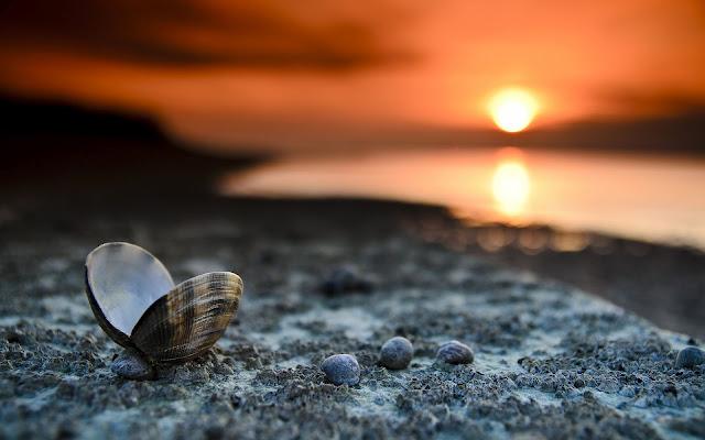 Schelp op het strand en een ondergaande zon
