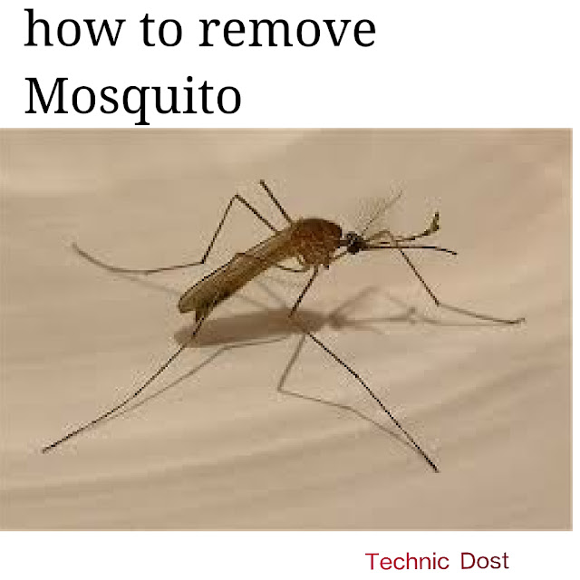 how to remove mosquito tips