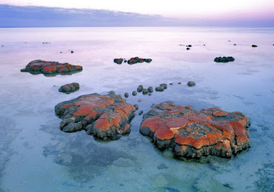 Stromatolites give tesimony of the Genesis Flood