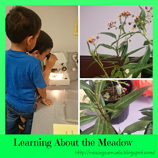 Learning About the Meadow: Week 35