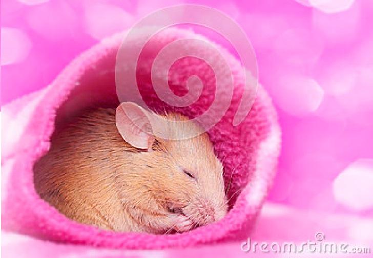 Bagaimana Seekor Tikus Bisa Mimpi ?