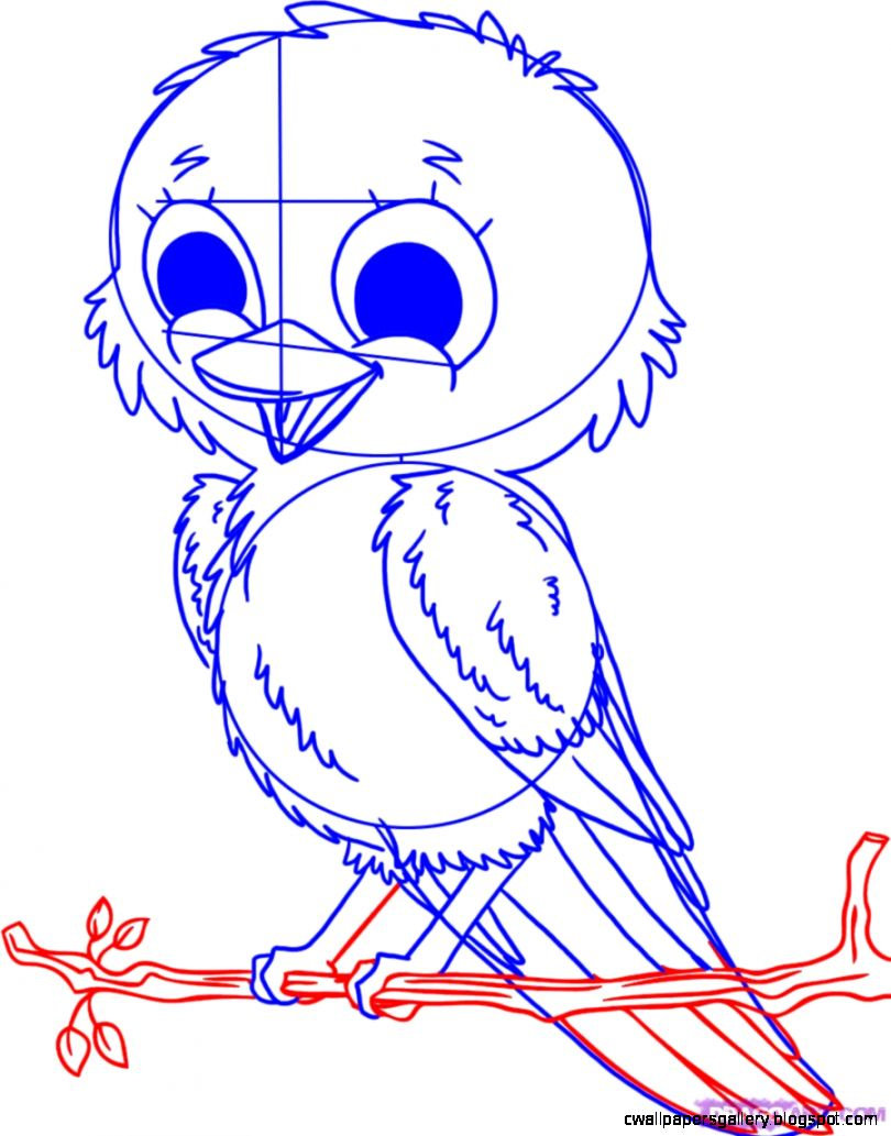 How to Draw Baby Birds Step by Step Birds Animals FREE Online