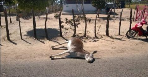 Homens armados matam animais no Agreste Alagoano