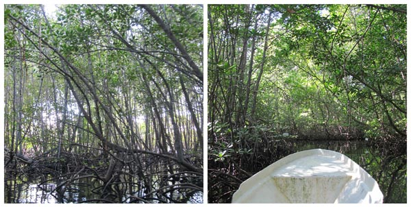 hutam mangrove nusa lembongan