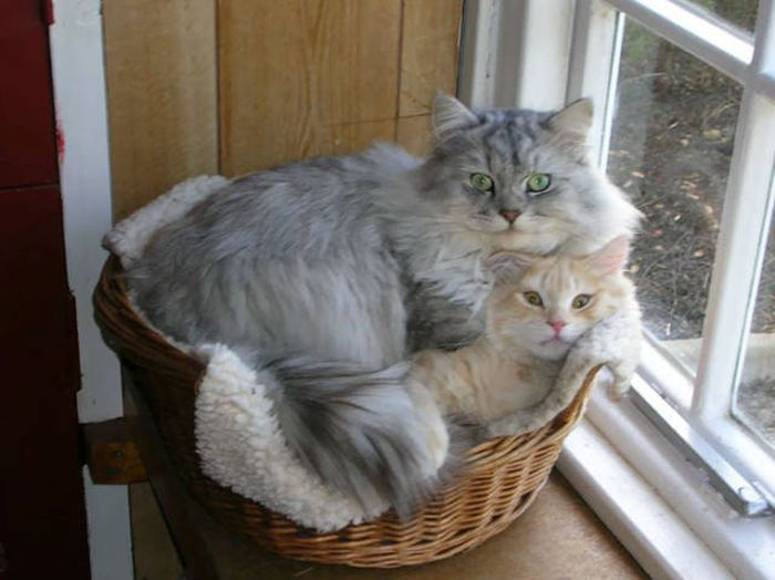 Funny cats - part 273, funny cat, cute cats, cat images