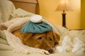 enfermedades mas comunes del perro