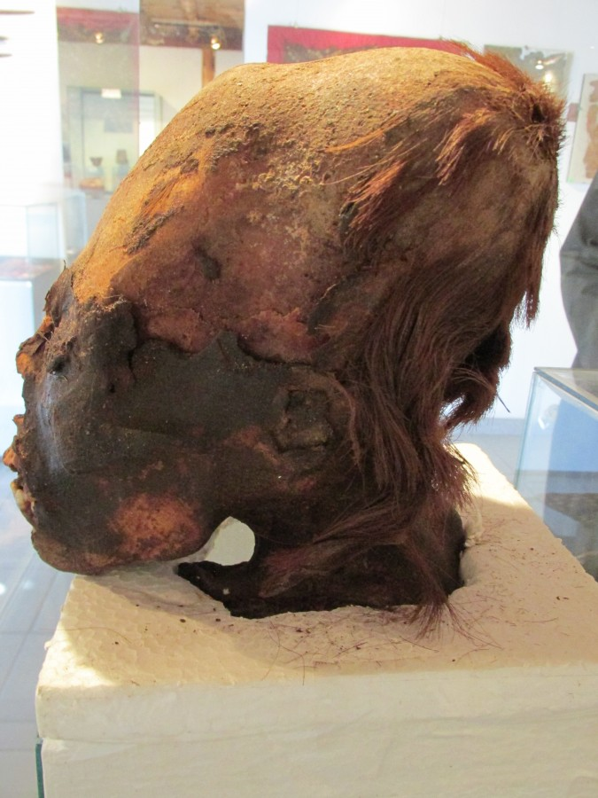 Cráneo alargado de Paracas que presenta restos de pelo rojizo. Ha sido llamado «Cleopatra», el por qué es evidente.