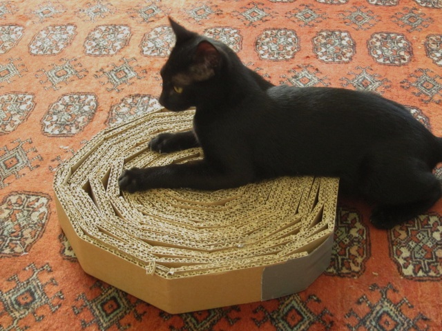 How+To+Keep+Cats+From+Scratching+Furniture