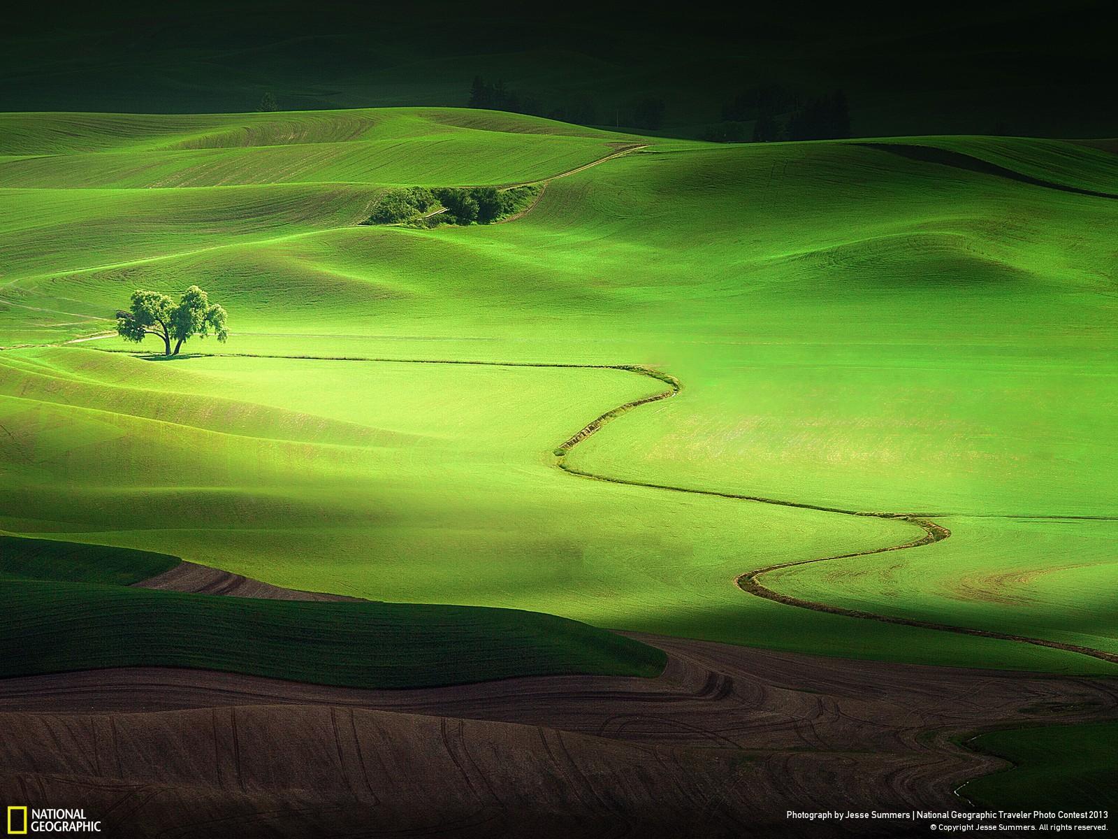 Green Field Wallpapers