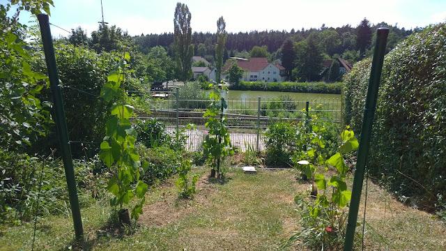 Wieder Dürre im Garten (c) by Joachim Wenk