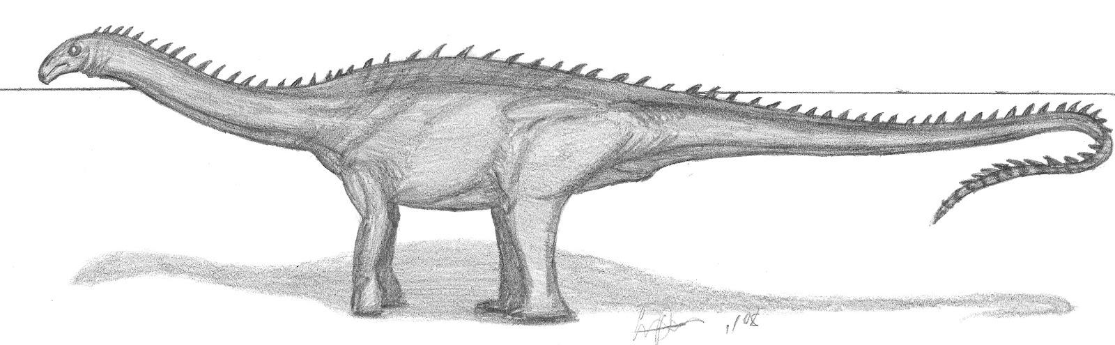 1600 x 495 jpeg 160kBChasmatosaurus