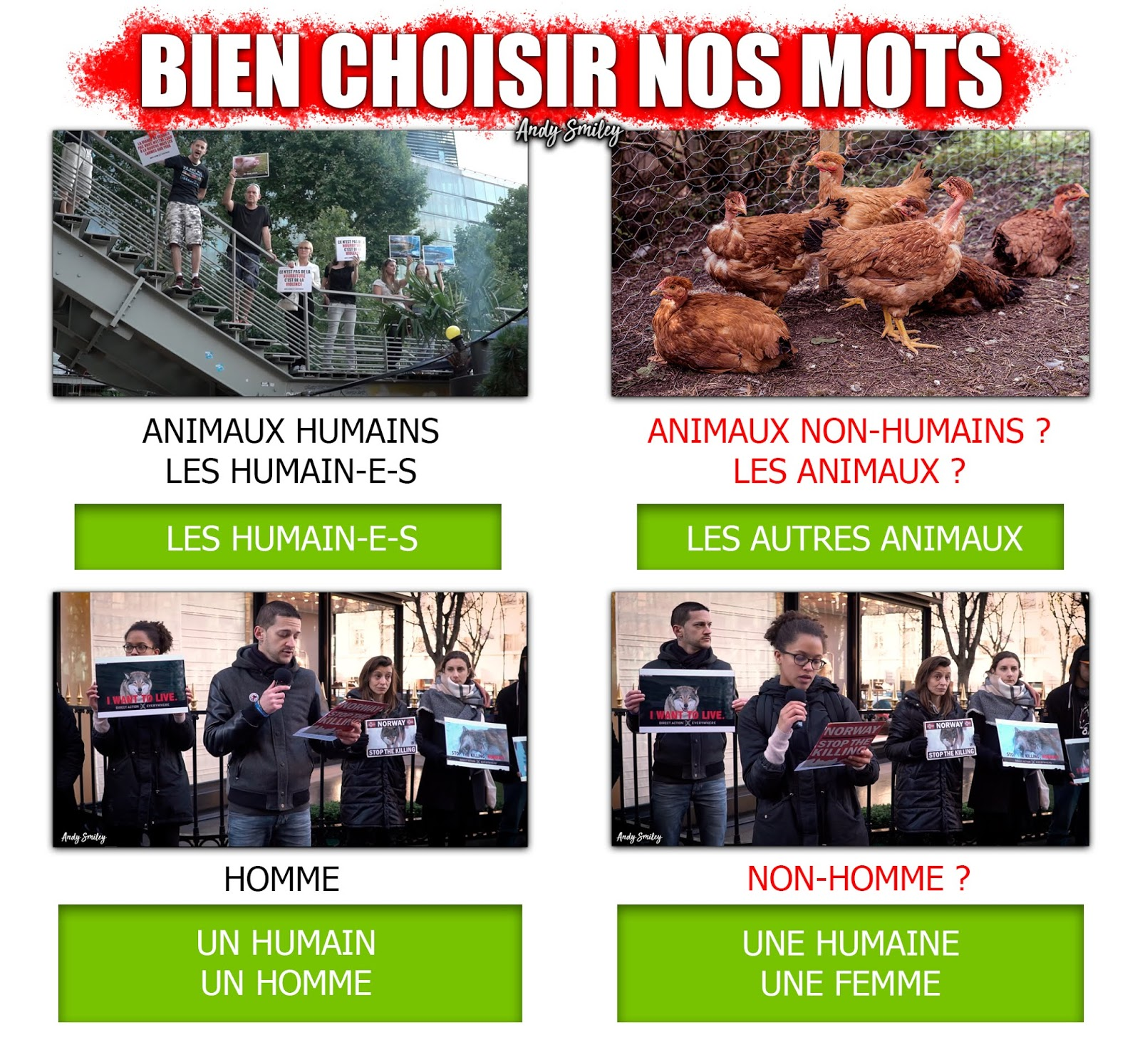 Animaux Non-Humains - Animaux Nonhumains - Les Autres Animaux - Les Animaux