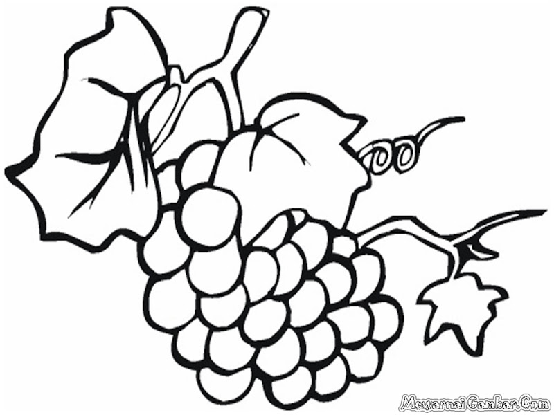 Coloring Pages Of Grapes Coloring Pages For Free
