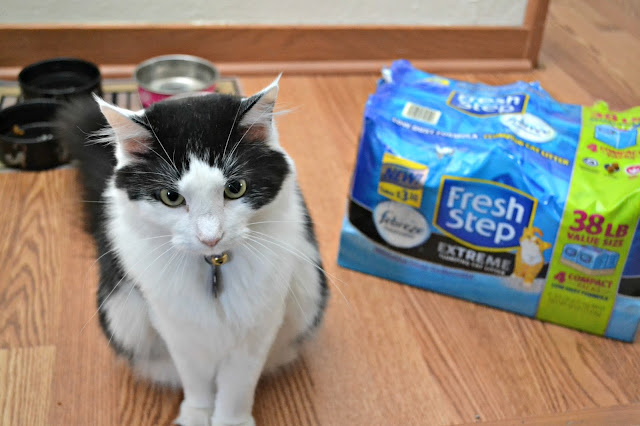 Cat litter, Cat litter Compact Packs, Fresh Step Multi cat Cat litter, Febreze, Easy to carry Cat litter, Storing cat litter in small spaces, Convenient cat litter, Tips on Keeping Your Cats Happy and Healthy