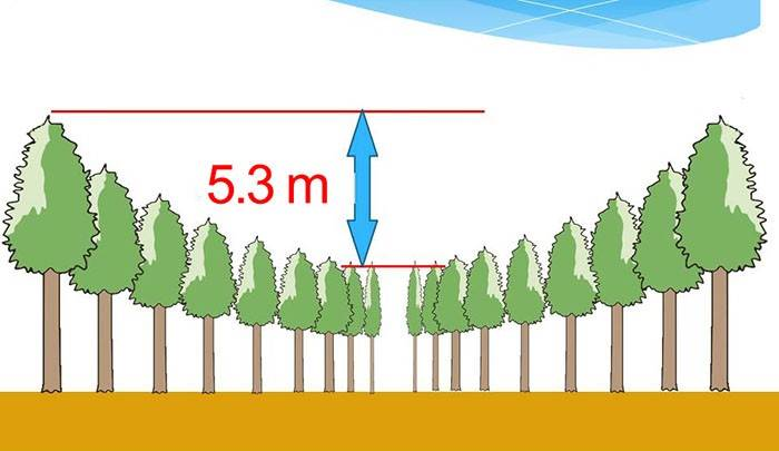 And judging by the photos, the experiment can be considered successful, because the difference between the trees is!
