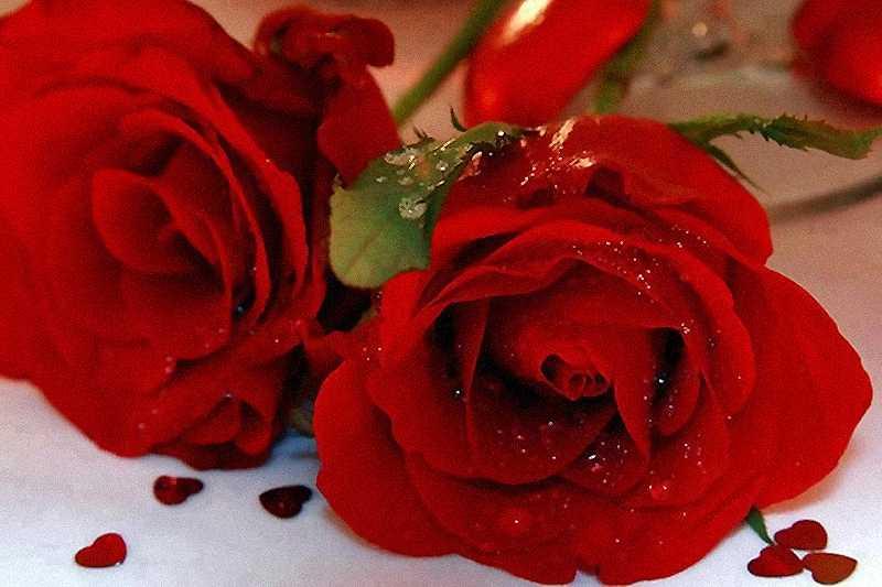 Imágenes De Flores Rosas Rojas Bloggergifs