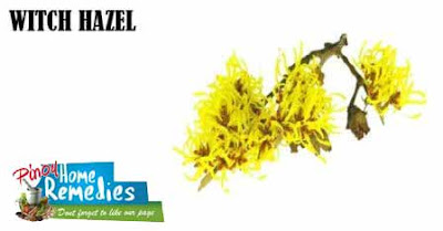 Home Remedies To Abbreviate Pimple Redness: Witch Hazel