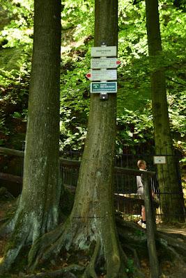 Czerwony szlak, w lewo prowadzi droga do zamku Vranov, w prawo do zamku Frydstejn