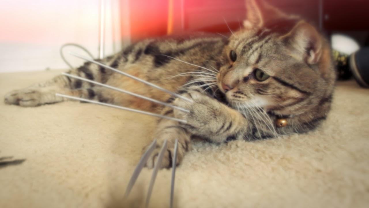 http://www.kaipojones.com/2014/02/x-men-origins-wolverine-cat.html