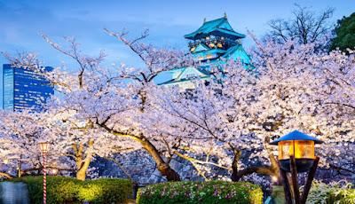 Um dos locais mais populares em Osaka para apreciar a beleza das flores de cerejeira