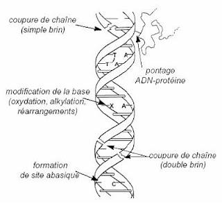 Pengertian Mutasi