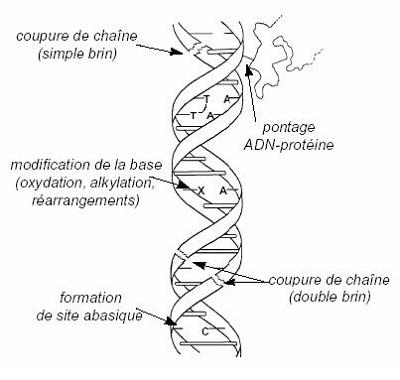 Materi Mutasi (Rangkuman SBMPTN)