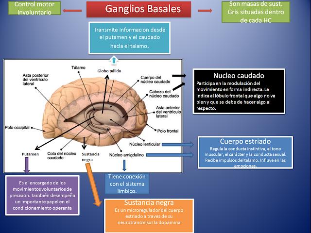 Resultado de imagen de ganglios basales funciones