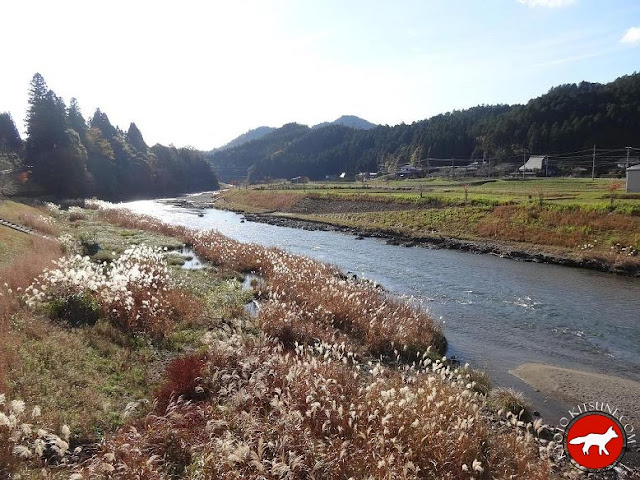 Herbes de l'automne au Japon à Kyoto