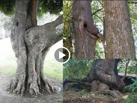 Top 10 Sexiest Tree Photos!