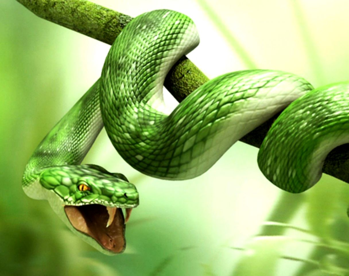 Black Mamba Snake Beautiful Pictures Top Hd Wallpapers Of