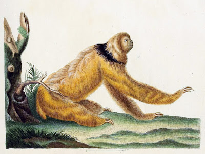 three-toed sloth Schreber, Die Säugthiere in Abbildungen nach der Natur, 1855