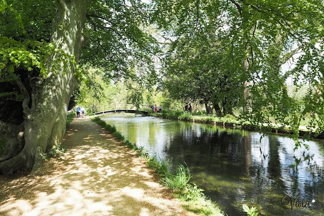 Mottisfont River Test